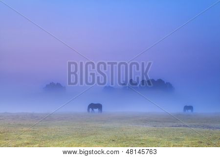 horses silhouettes in dense fog grazing on pasture poster