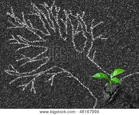 Chalk contour of tree on asphalt road and young growth concept poster
