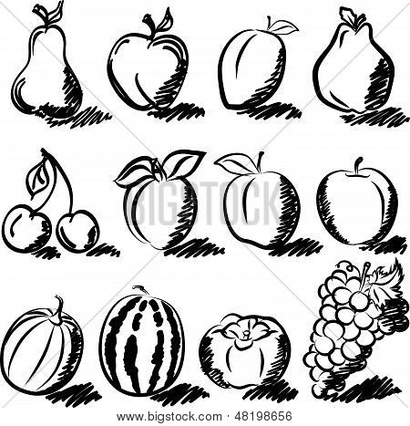Temperate fruits sketch drawing