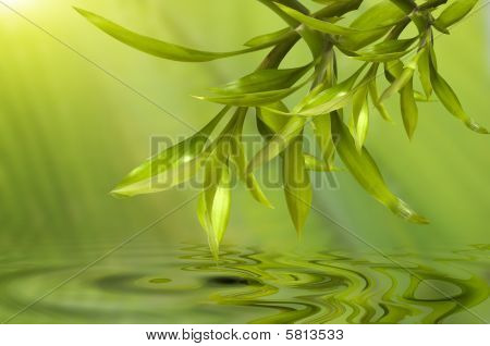 Spa Still Life, With Bamboo Leafs Reflecting In The Water