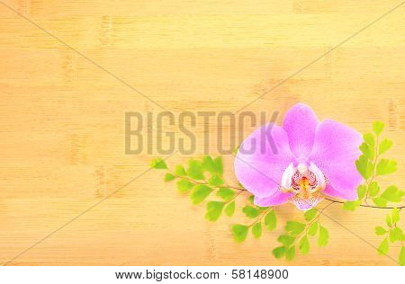 Lilac  Orchid And Green Branch On Bamboo