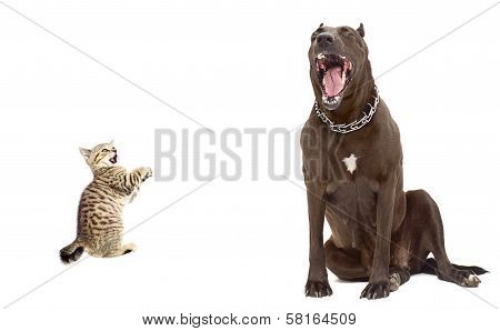 Funny image. Kitten was scared big dog. Isolated on white background. poster