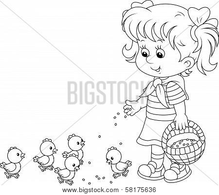 Girl feeding chicks