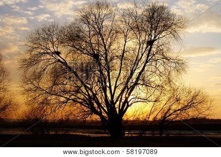 Branchy Tree Ashore On Sunse