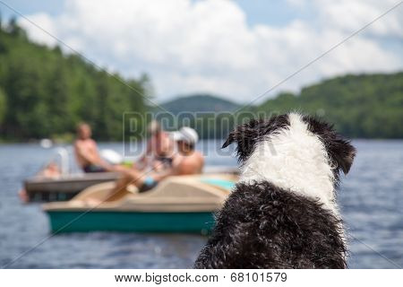 Dog Watches Activity On The Lake