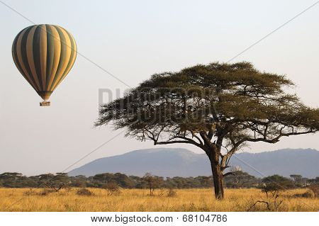 Flying Green And Yellow Balloon Near An Acacia Tree