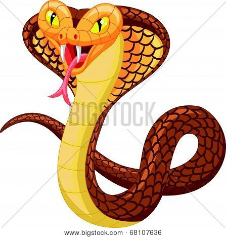 Vector illustration of cute angry cobra cartoon, isolated on white poster
