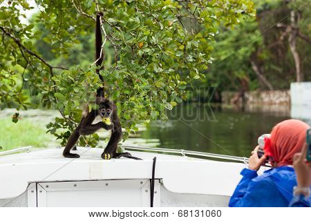 Spider Monkey Posing For Tourists