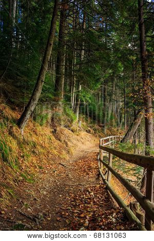 Morning Walks In Autumn Forest