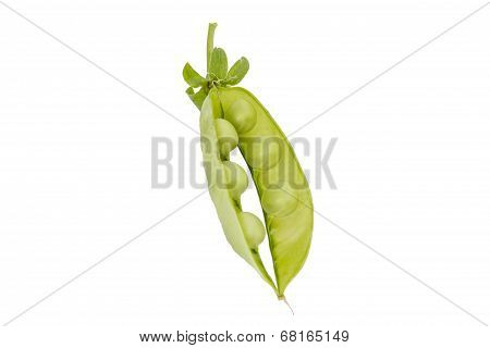 Fresh Green Peas And Pod On White Background
