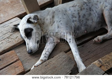 Homeless Stray Dog Sleeping