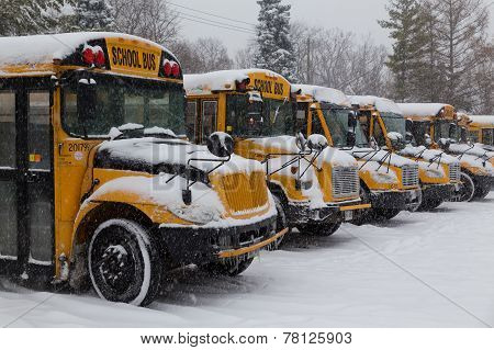 Yellow School Buses Parked In The Snow
