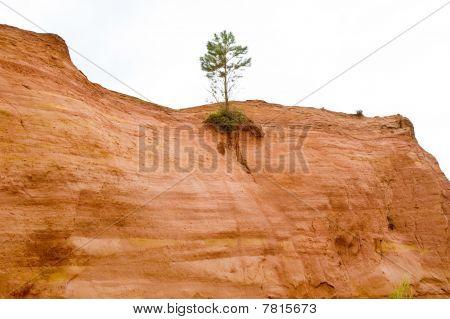 Root Power