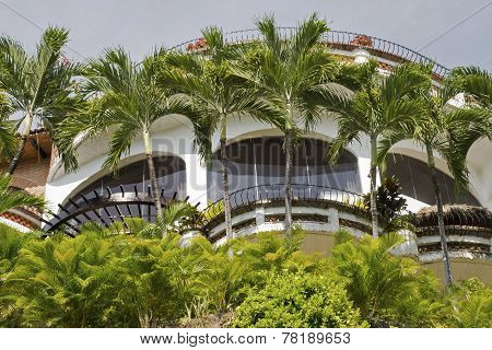 Palm Tree Fringed Windows