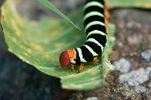 colorful caterpillar walking on a green leaf poster