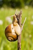 snail sitting on a branch in a nature poster
