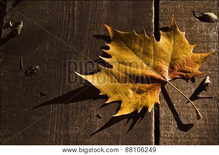 A Leaf In Autumn In The Wood