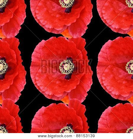 Seamless Pattern 3 Large Poppies Black Background