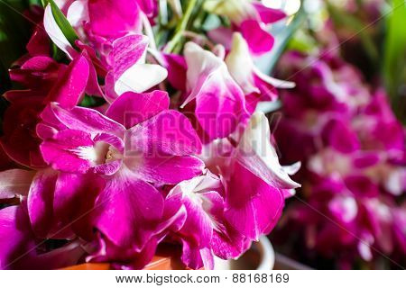 Orchid For Buddhist