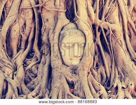 Stock Photo: Buddha head in tree roots at ayutthaya ,Thailand.