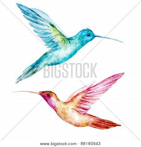 Watercolor colibri bird