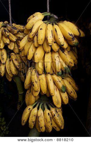 bananas at the market