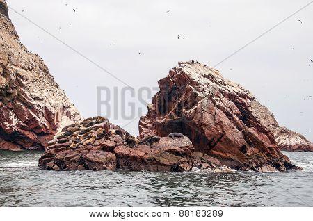 sea lion on rocky formation Islas Ballestas, paracas