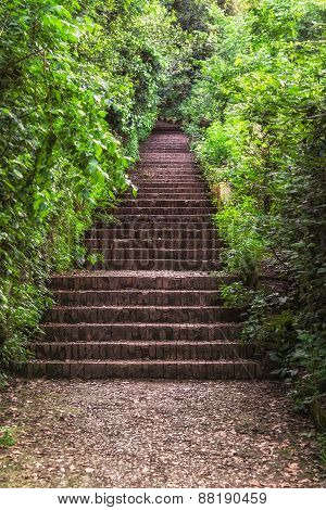 Staircase In The Green