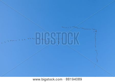 Two flocks of ducks in the sky