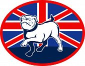 illustration of a Proud English bulldog marching with Great Britain or British flag at background set inside an oval. poster