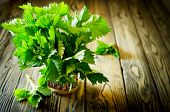 Bunch of fresh green nettle on wooden background. Copy space. Selective Focus poster