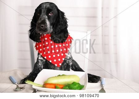Dog looking at plate of fresh vegetables on dining table