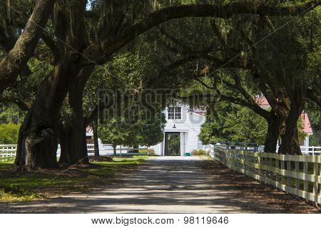 southern plantation with rows of live oaks and barn in South Carolina