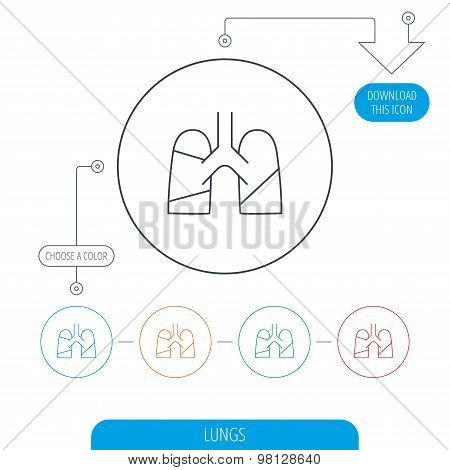 Lungs icon. Transplantation organ sign. Pulmology symbol. Line circle buttons. Download arrow symbol. Vector poster