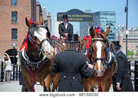 Shire horses and handlers, Liverpool.