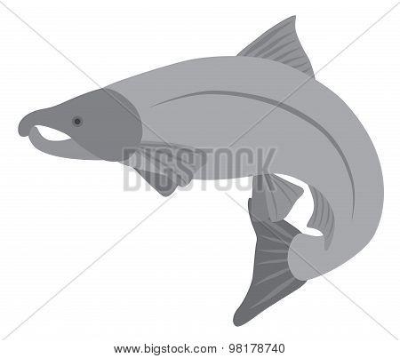 Coho Salmon Grayscale Vector Illustration