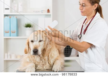 Veterinary Clinic