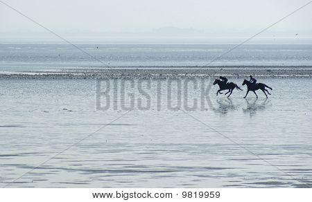Racehorses on Powfoot beach, Scotland