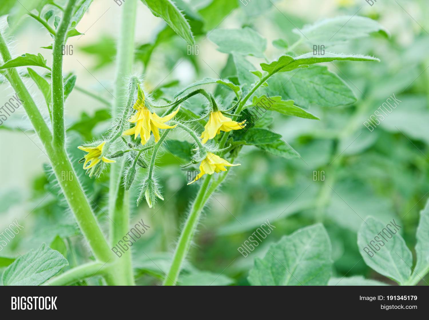 Small Flowers Yellow Image & Photo (Free Trial) | Bigstock