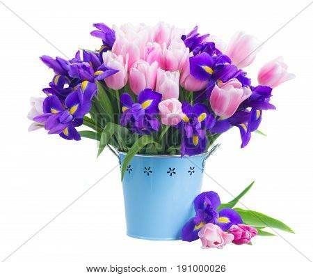Blue irises and pik tulips flowers in metal pot isolated on white background