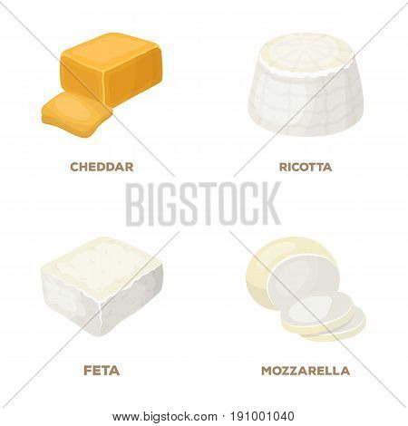 Mozzarella, feta, cheddar, ricotta.Different types of cheese set collection icons in cartoon style vector symbol stock illustration .