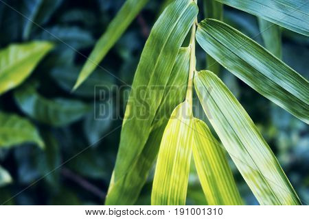 Bright bamboo leaf on green background. Bamboo leaf moody style toned photo for spa salon meditation wallpaper zen poster. Fresh green leaf. Tropical garden greenery. Japanese plant. Bamboo decor
