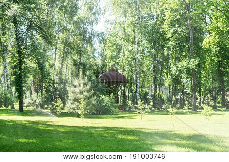 A beautiful lawn with cut grass and a pergola in the background among the birches