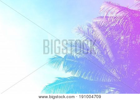 Coco palm tree on sky background. Gentle pink and blue toned photo. Romantic tropical island. Exotic nature in sweet marshmallow colors. Romantic wedding invitation. Summer vacation banner template