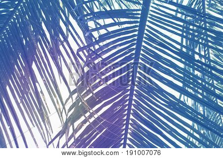 Green palm leaf over sky background. Beautiful palm leaf photo with moody effect tone. Palm leaves background. Tropical nature vintage print or poster. Exotic vacation tourism banner. Zen wanderlust