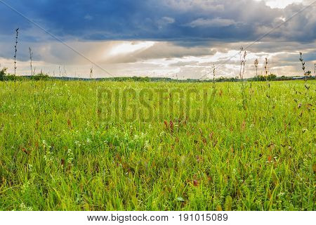 Landscape with green field and cloudy sky