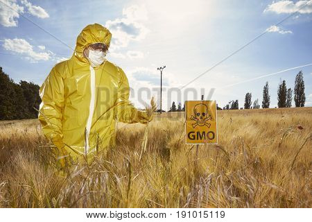 Man in protective suit working with genetically modified cereals on field