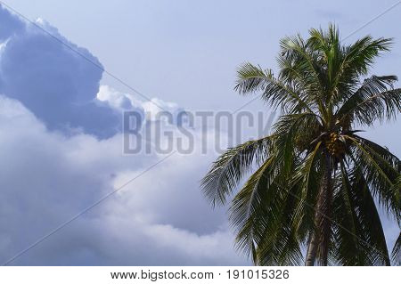Cloud on sky and palm tree crown. Skyscape with big cloud photo. Tropical island sky landscape. Spectacular fluffy cloud. Coco palm tree top banner template. Rainy day weather atmosphere background