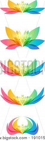 Set colorful flower head on white background different shapes of the same flower