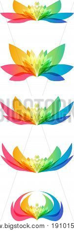 Set colorful flower head on white background, different shapes of the same flower